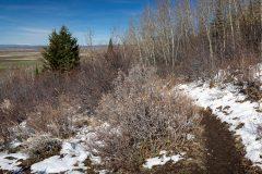 Snow Along Aspen Trail Above Teton Valley