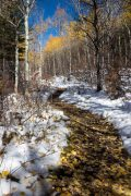 Autumn Leaves on Snow and Aspen Trail