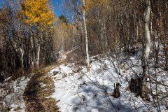 Hiking Trail Below Late Fall Aspens