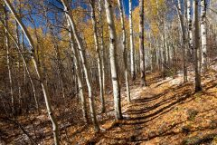 Fall Leaves on Ground and Hiking Trail
