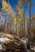 Aspen Trail Below Late Autumn Colors
