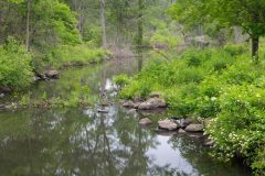 Cross River in Summer Forest