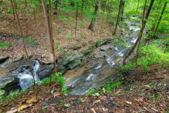 Foundry Brook Cascading Through Forest