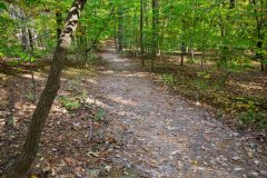 Hiking Trail in Southern Forest