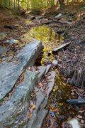 Fallen Leaves Around Creek