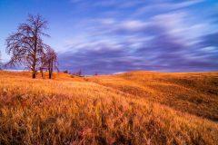 Grassy Hills at Dawn