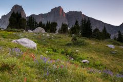 Wildflowers Below Cirque of the Towers