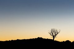 Silhouetted Tree Against Evening Sky