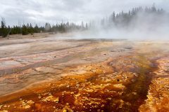 Thermophiles in Black Pool Runoff