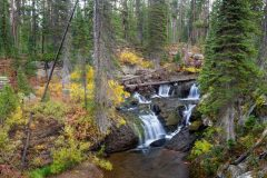 Cascade Creek Pouring over Falls in Dense Forest