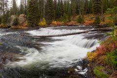 Autumn Leaves Along Fall River
