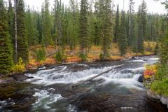 Fall River in Evergreen Forest