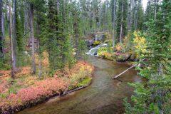Cascade Creek Winding Through Autumn Forest