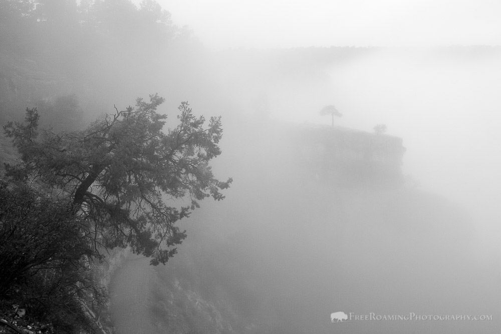 Fog at the Grand Canyon's South Rim