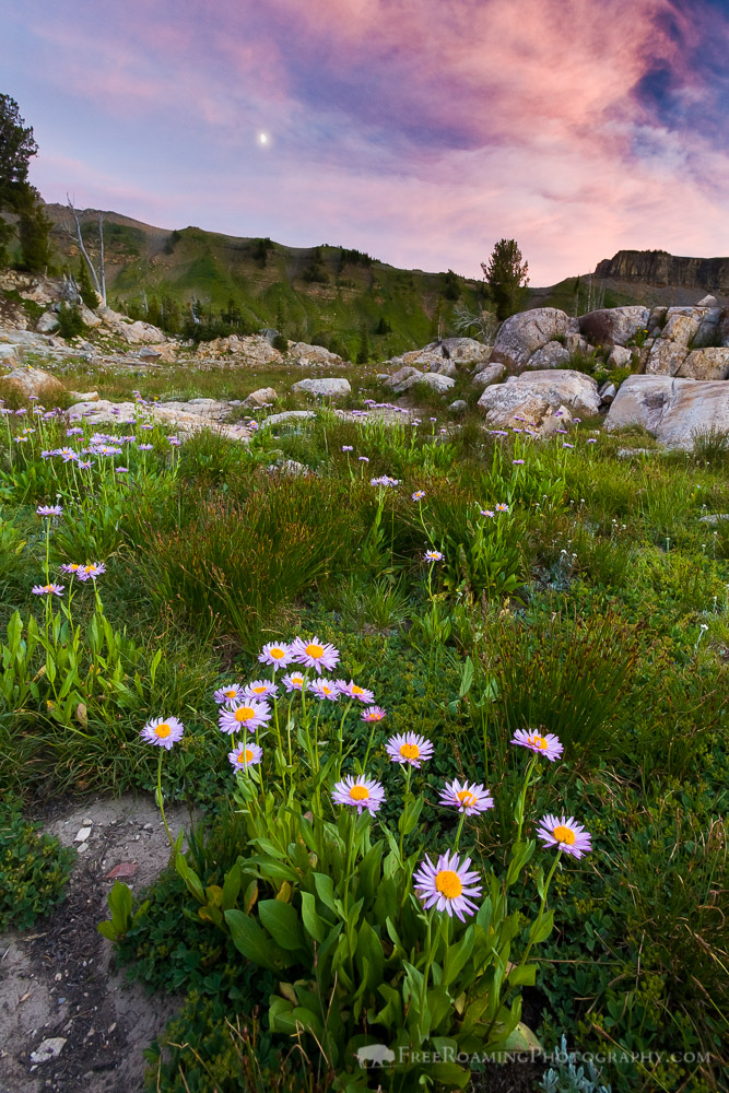 Wildflowers and Boulders of the Alaska Basin