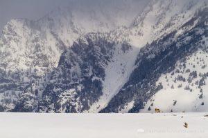 Coyotes and the Teton Mountains