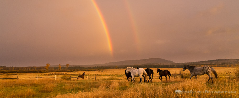 Photographing a Rainy Morning in Jackson Hole