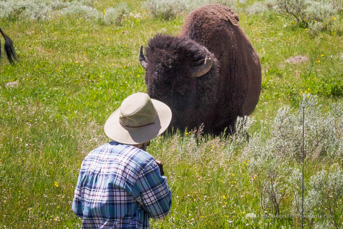 Why Yellowstone National Park Needs a Shuttle System