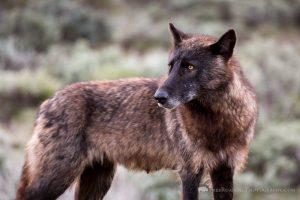A Serendipitous Bighorn Basin Getaway